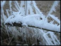 /images/stories/20071223_szadz/800_img_5956_palka2.jpg