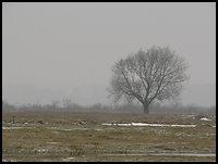 /images/stories/200902_ZimaNaPodlasiu/Narew/640_img_3964_drzewo.jpg