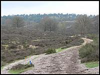 images/stories/20060430_Holandia/800_P1020637_Wrzosowisko.JPG