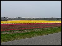 images/stories/20060501_Holandia/800_P1020772_Tulipany.JPG