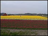 images/stories/20060501_Holandia/800_P1020777_PolaTulipanowe.JPG