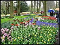 images/stories/20060501_Holandia/800_P1020844_Keukenhof.JPG
