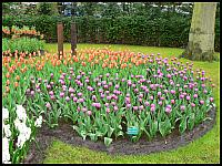 images/stories/20060501_Holandia/800_P1020853_Keukenhof.JPG