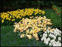 images/stories/20060501_Holandia/800_P1020874_Keukenhof.JPG