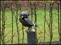 images/stories/20060501_Holandia/800_P1020887_Sowka.JPG