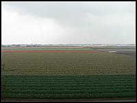 images/stories/20060501_Holandia/800_P1020993_PolaTulipanow.JPG