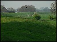 images/stories/20060502_Holandia/800_P1030187_Ptaszki.JPG
