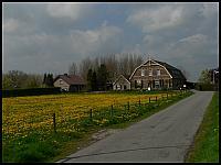 images/stories/20060502_Holandia/800_P1030225_Zolto.JPG