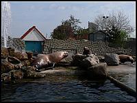 images/stories/20060503_Holandia/800_P1030330_Fokarium.JPG