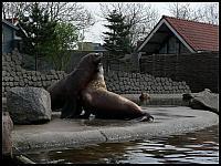 images/stories/20060503_Holandia/800_P1030347_Fokarium.JPG