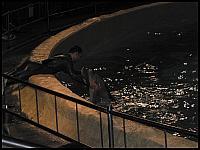 images/stories/20060503_Holandia/800_P1030367_Delfin.JPG