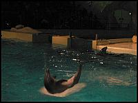 images/stories/20060503_Holandia/800_P1030381_Delfin.JPG