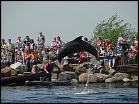 images/stories/20060503_Holandia/800_P1030471_Delfin.JPG