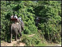 images/stories/20080503_Tajlandia_Sobota/640_Fot117_img_2713_SlonieSpacer_1.jpg