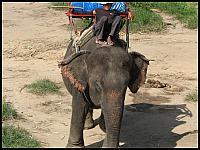 images/stories/20080503_Tajlandia_Sobota/640_Fot119_IMG_9581_SlonIprzewoznik.JPG