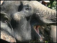 images/stories/20080503_Tajlandia_Sobota/640_Fot120_img_2740_UsmiechSlonia_1.jpg