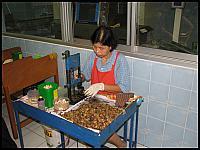 images/stories/20080503_Tajlandia_Sobota/640_Fot123_IMG_9636_OrzeszkiNerkowca.JPG