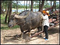 images/stories/20080503_Tajlandia_Sobota/640_Fot152_IMG_9687_Bawol.JPG