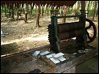 images/stories/20080503_Tajlandia_Sobota/640_Fot161_IMG_3281_ProdukcjaKauczuku_1.JPG