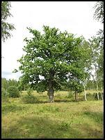 images/stories/200908_UrlopLetni/krajobraz/640_img_1443_Dab.jpg