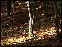 images/stories/20101017_JesienLasyOliwskie/640_img_1603_Drzewko.jpg