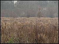 images/stories/20110815_OliwaMojeMiejsce/800_img_2942_Opacka.jpg