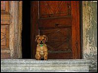 images/stories/20110904_ZulawyPoludniowe/800_IMG_3282_Jelonki3MieszkaniecPodcienia_v1.JPG