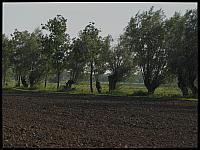 images/stories/20110904_ZulawyPoludniowe/800_IMG_3349_Wierzby_v1.JPG
