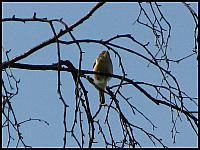 images/stories/20120421_KwiatkiLukasz/640_IMG_5197_Piecuszek_v1.JPG