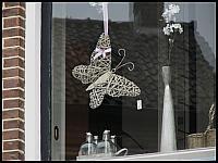 images/stories/20120429_HolandiaOkoliceZutphen/640_IMG_5335_Motylek_v1.JPG