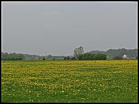 images/stories/20120429_HolandiaOkoliceZutphen/640_IMG_5351_MniszekLekarski_v1.JPG