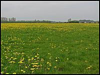 images/stories/20120429_HolandiaOkoliceZutphen/640_IMG_5353_MniszekLekarski_v1.JPG