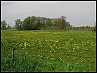 images/stories/20120429_HolandiaOkoliceZutphen/640_IMG_5378_PrzyDrodze_v1.JPG