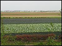 images/stories/20120502_HolandiaKeukenhoff/640_20120502_142450_PolaTulipanowe_v1.jpg