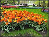 images/stories/20120502_HolandiaKeukenhoff/640_20120502_151715_Tulipany_v1.jpg