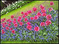 images/stories/20120502_HolandiaKeukenhoff/640_20120502_153948_Tulipany_v1.jpg