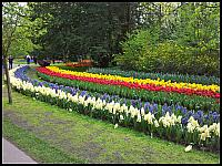 images/stories/20120502_HolandiaKeukenhoff/640_20120502_154235_Parkowo_v1.jpg