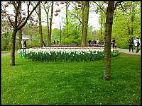 images/stories/20120502_HolandiaKeukenhoff/640_20120502_161148_Parkowo_v1.jpg