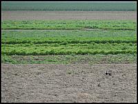 images/stories/20120502_HolandiaKeukenhoff/640_IMG_5886_Czajka_v1.JPG