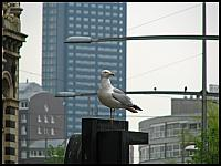 images/stories/20120503_HolandiadenHaag/640_IMG_6262_DenHaagMewa_v1.JPG