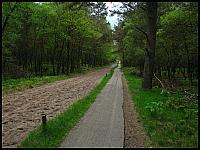 images/stories/20120504_HolandiaVeluwezoom/640_IMG_6406_SciezkaWparkuNarodowym_v1.JPG