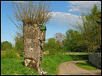 images/stories/2014/20140504_SwietoTulipana/640_IMG_2354_Kapliczka_v1.JPG