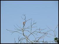 images/stories/200908_UrlopLetni/przyroda/640_img_1024_Dziezba.jpg
