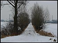 images/stories/20130127_WyspaSobieszewska/640_IMG_8318_Wierzby_v1.JPG